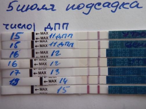 Тест на хгч кровь когда делать - 017e5